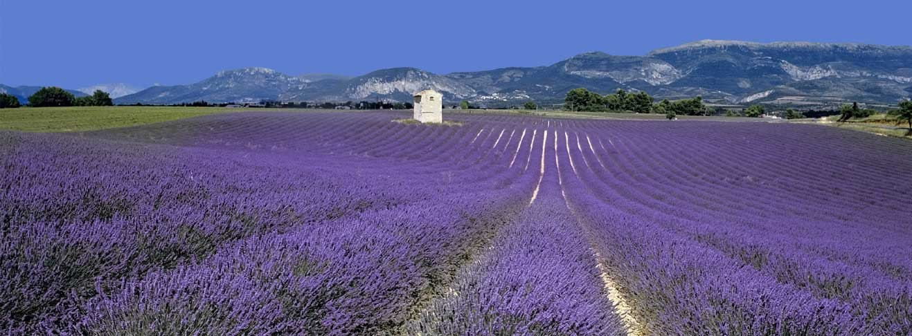 LookING FOR A PROPERTY in The Luberon?