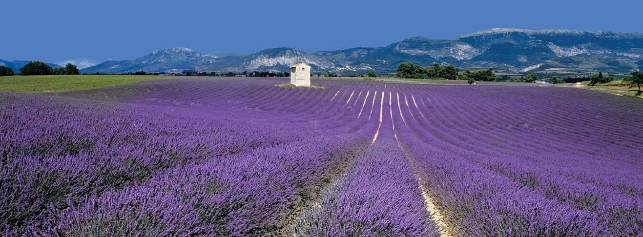 LookING FOR A PROPERTY in Provence?
